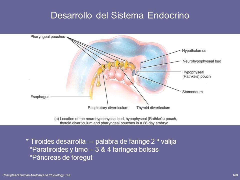 Desarrollo del Sistema Endocrino