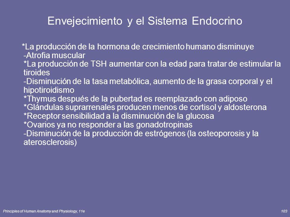 Envejecimiento y el Sistema Endocrino