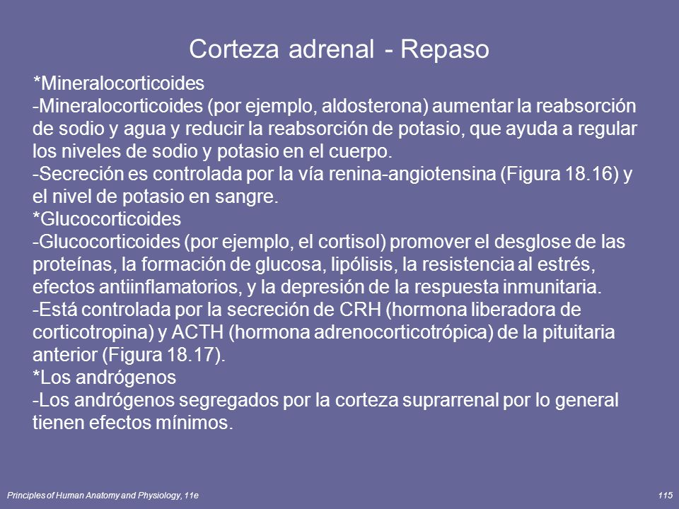 Corteza adrenal - Repaso
