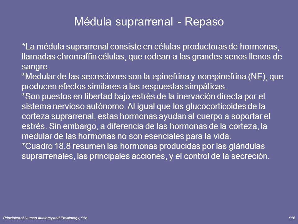 Médula suprarrenal - Repaso