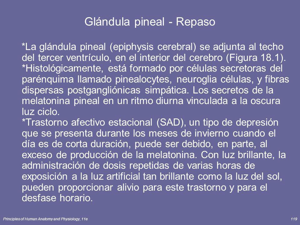 Glándula pineal - Repaso