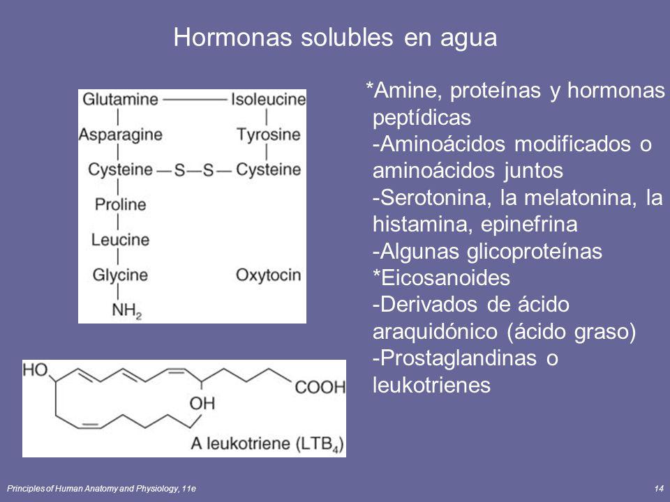 Hormonas solubles en agua
