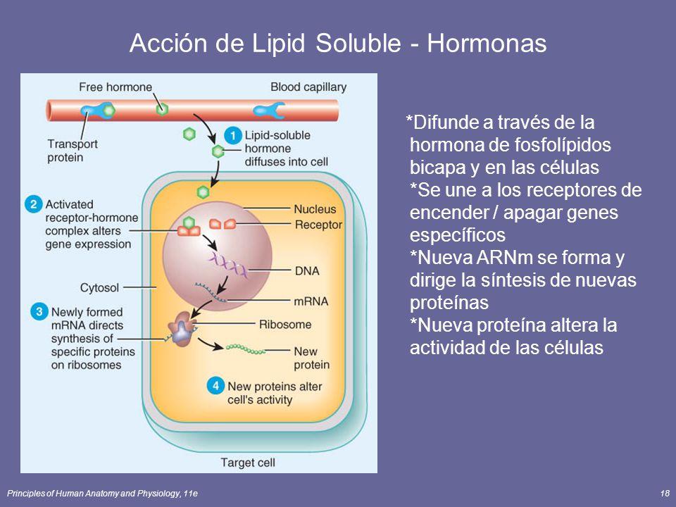 Acción de Lipid Soluble - Hormonas