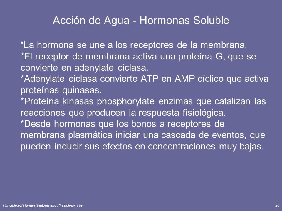 Acción de Agua - Hormonas Soluble