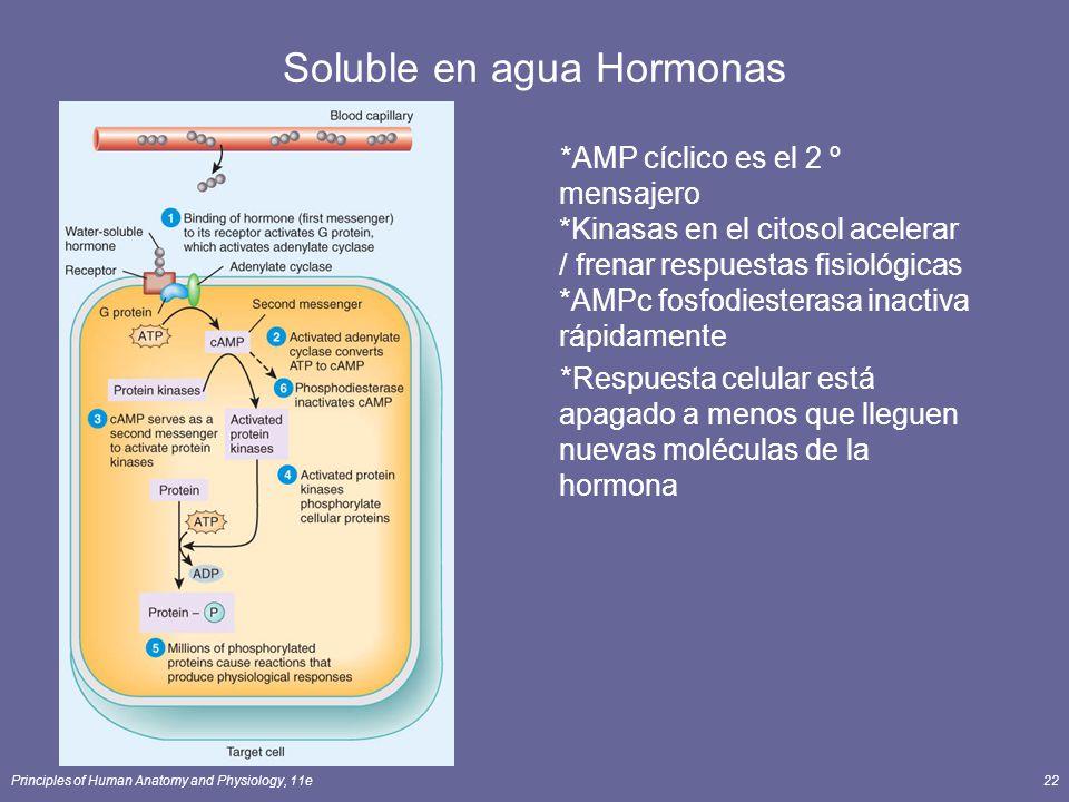Soluble en agua Hormonas