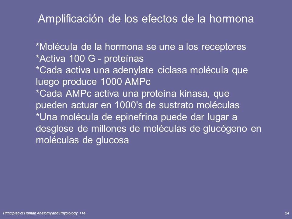 Amplificación de los efectos de la hormona