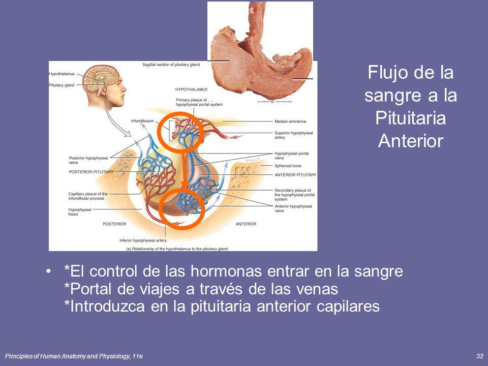 Flujo de la sangre a la Pituitaria Anterior