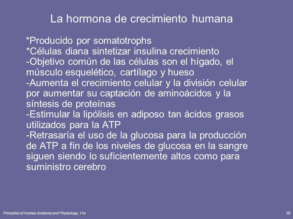 La hormona de crecimiento humana