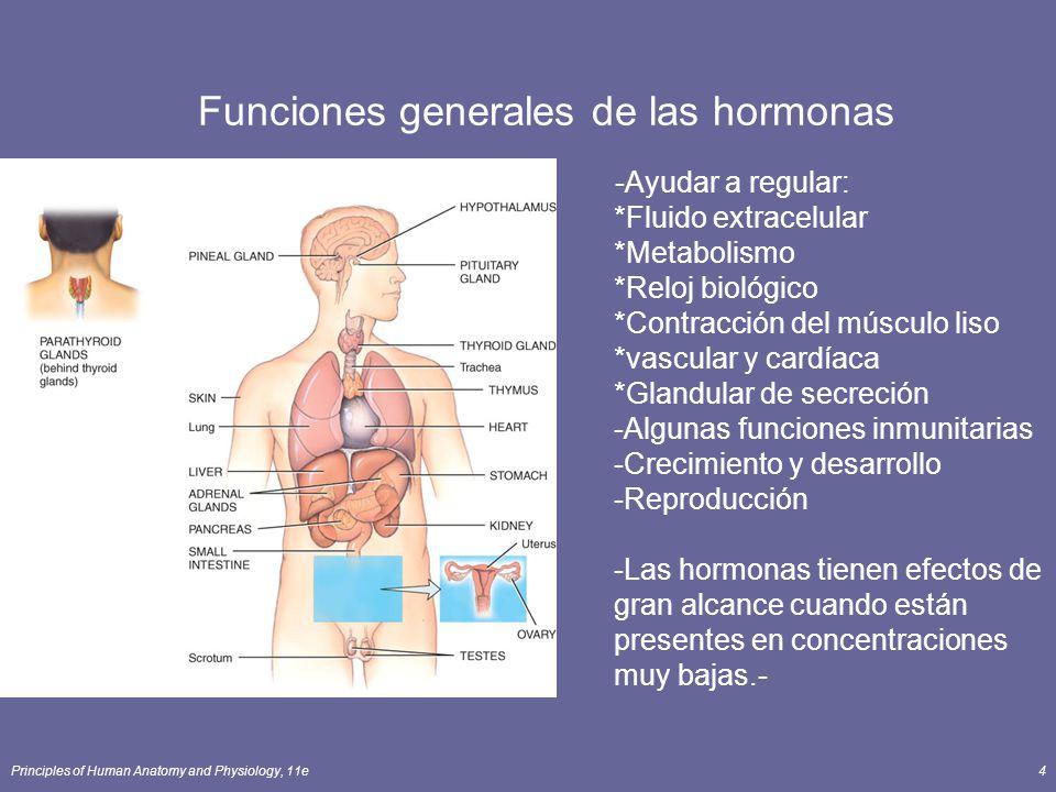 Funciones generales de las hormonas