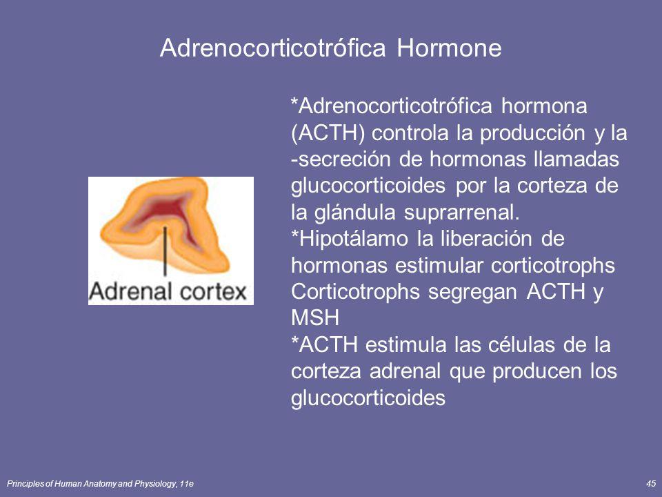 Adrenocorticotrófica Hormone