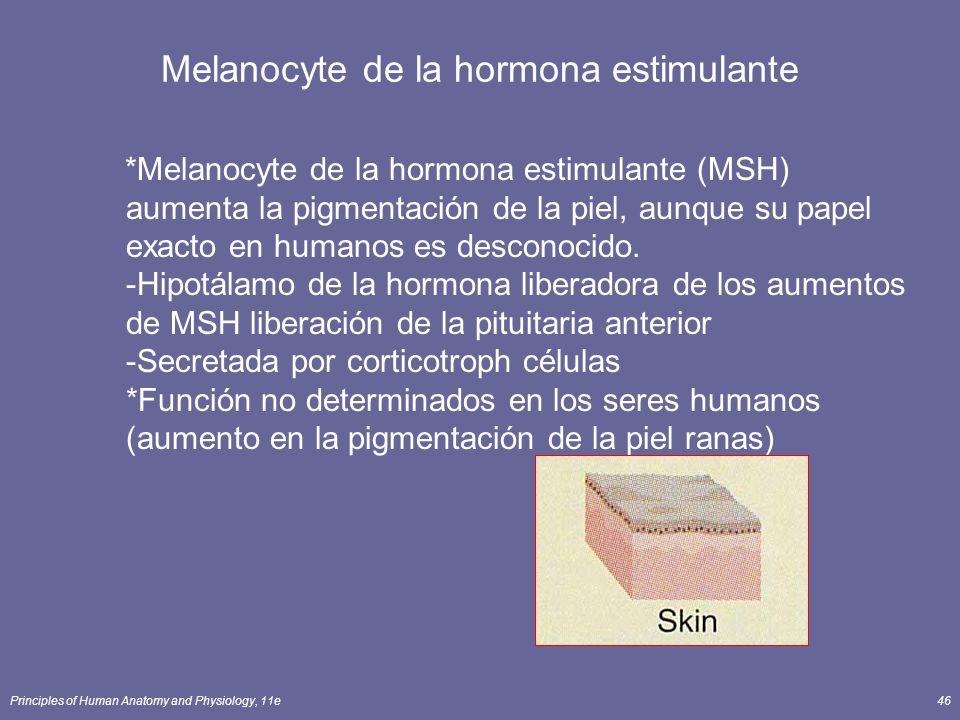 Melanocyte de la hormona estimulante