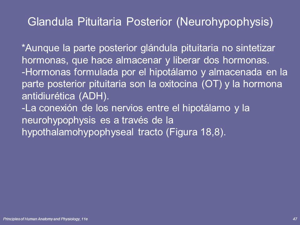 Glandula Pituitaria Posterior (Neurohypophysis)