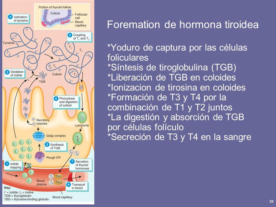 Foremation de hormona tiroidea