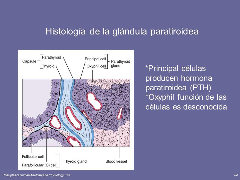 Histología de la glándula paratiroidea