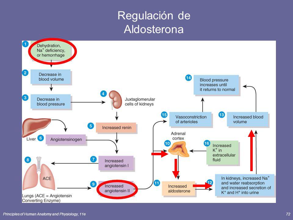 Regulación de Aldosterona