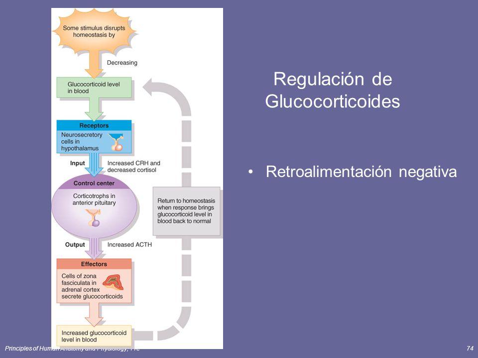 Regulación de Glucocorticoides
