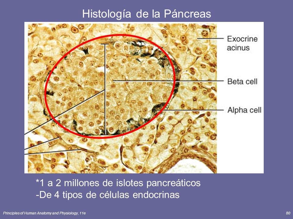 Histología de la Páncreas
