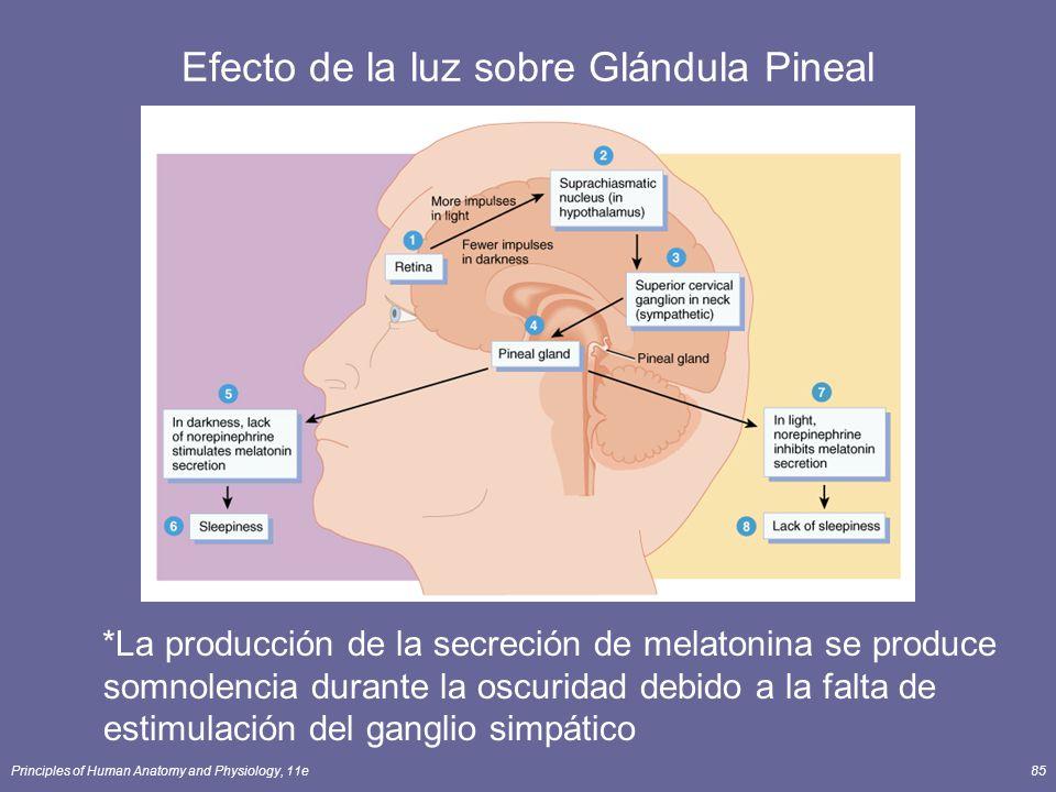 Efecto de la luz sobre Glándula Pineal