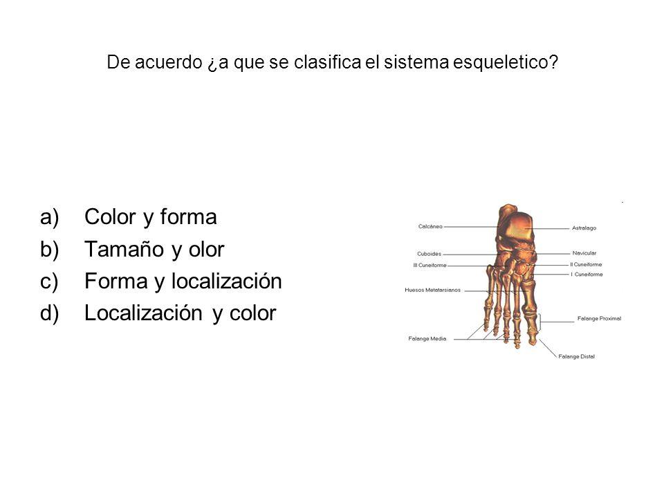 De acuerdo ¿a que se clasifica el sistema esqueletico