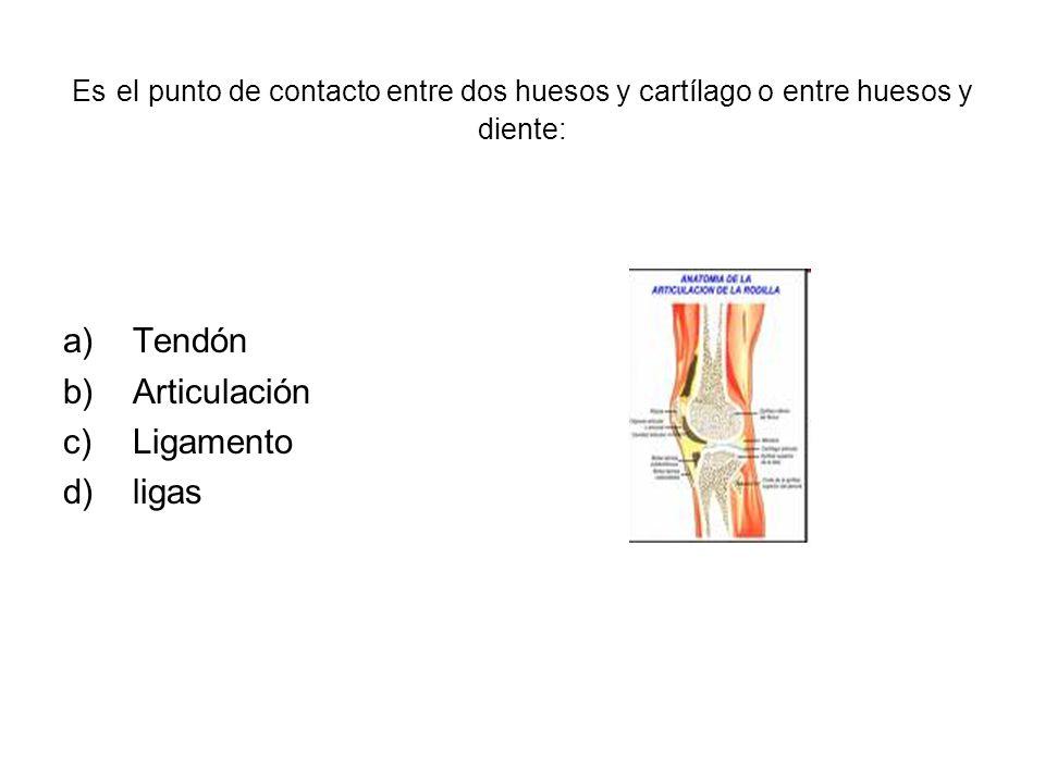 Tendón Articulación Ligamento ligas