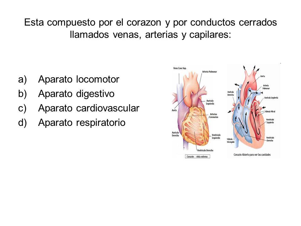 Esta compuesto por el corazon y por conductos cerrados llamados venas, arterias y capilares: