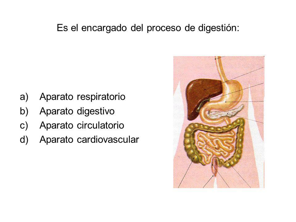 Es el encargado del proceso de digestión: