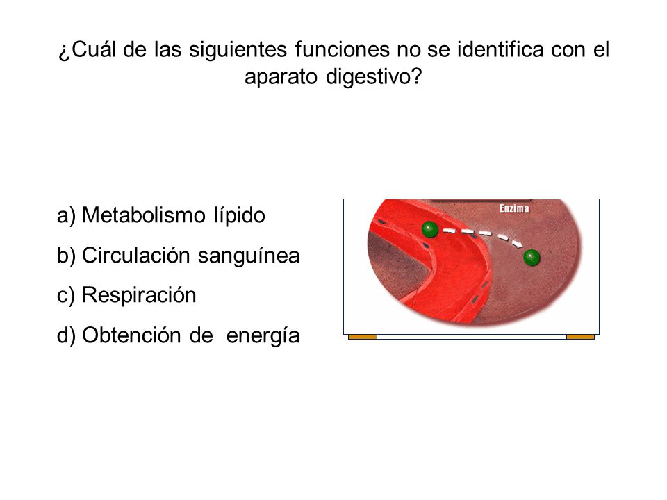 ¿Cuál de las siguientes funciones no se identifica con el aparato digestivo