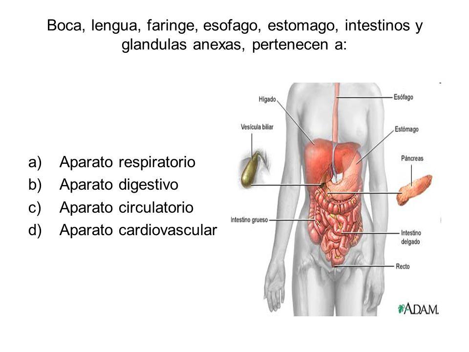 Boca, lengua, faringe, esofago, estomago, intestinos y glandulas anexas, pertenecen a: