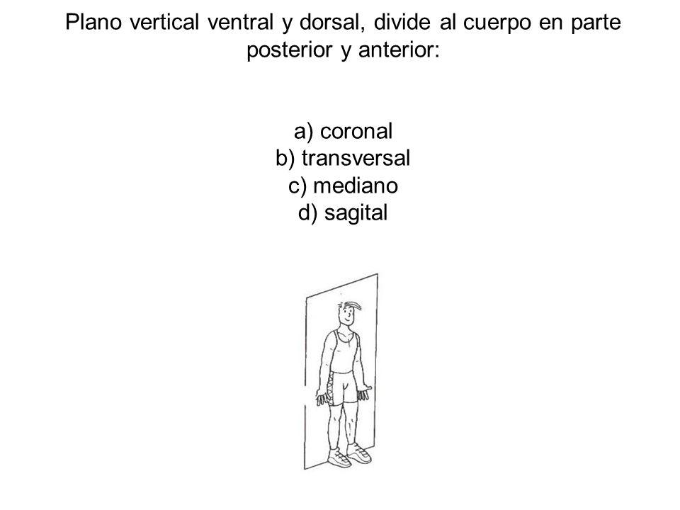 Plano vertical ventral y dorsal, divide al cuerpo en parte posterior y anterior: