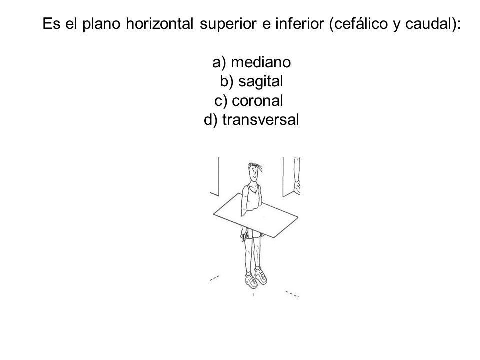 Es el plano horizontal superior e inferior (cefálico y caudal):