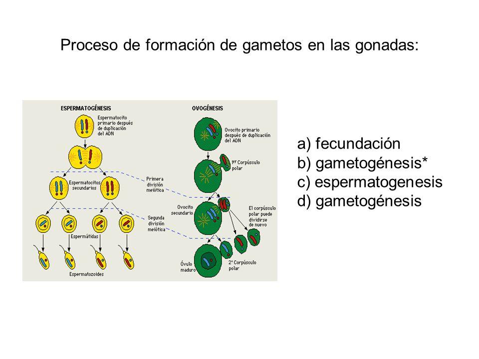 Proceso de formación de gametos en las gonadas: