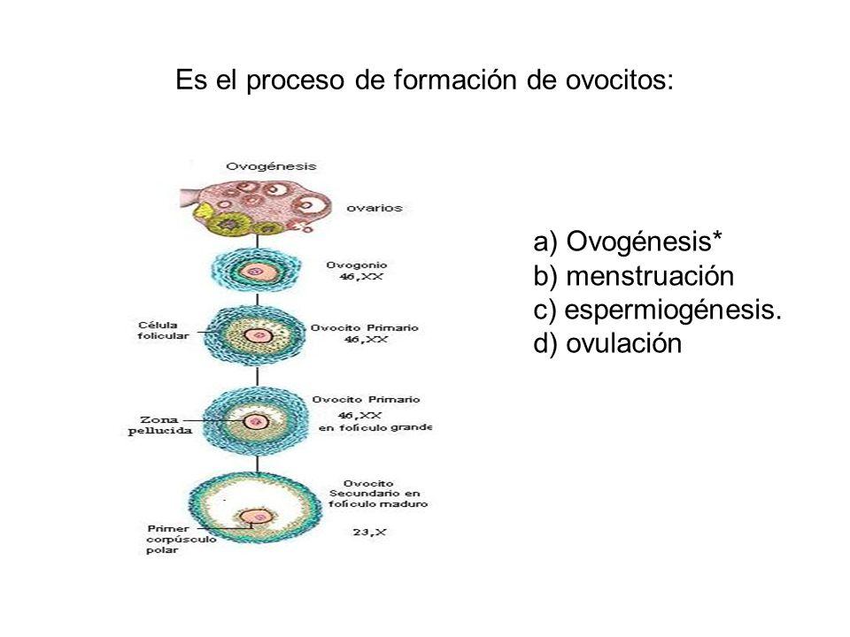 Es el proceso de formación de ovocitos:
