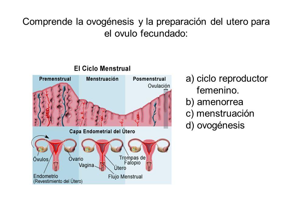 Comprende la ovogénesis y la preparación del utero para el ovulo fecundado: