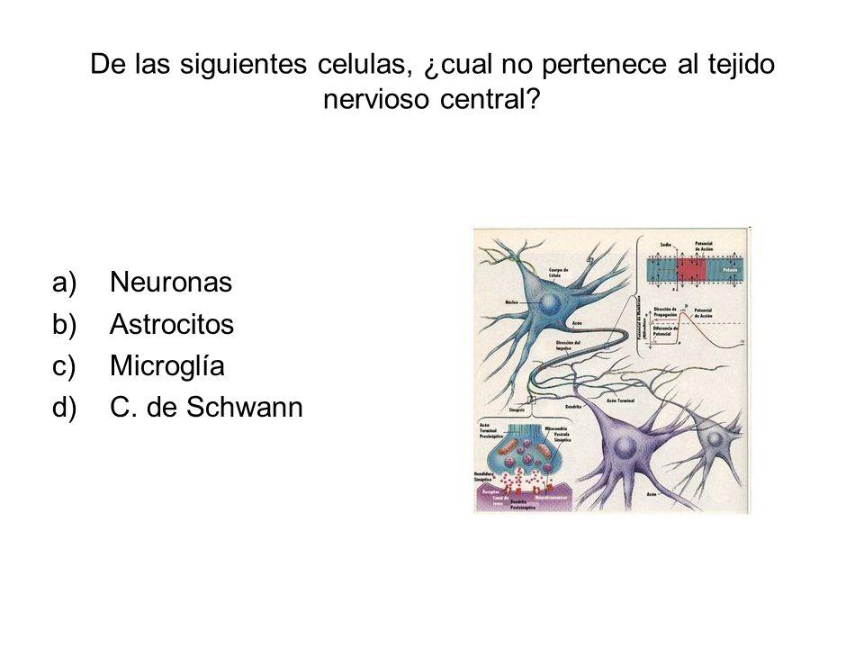 De las siguientes celulas, ¿cual no pertenece al tejido nervioso central