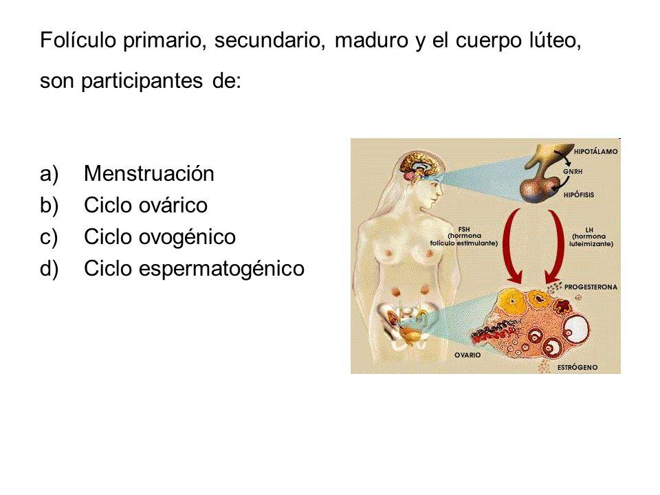 Folículo primario, secundario, maduro y el cuerpo lúteo, son participantes de: