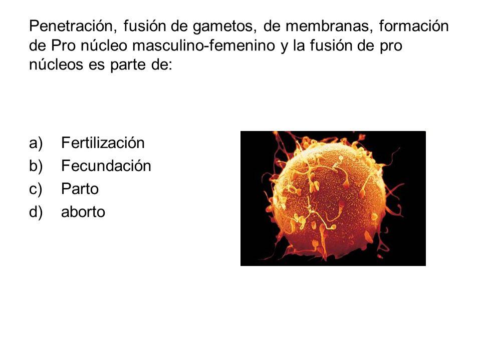 Penetración, fusión de gametos, de membranas, formación de Pro núcleo masculino-femenino y la fusión de pro núcleos es parte de:
