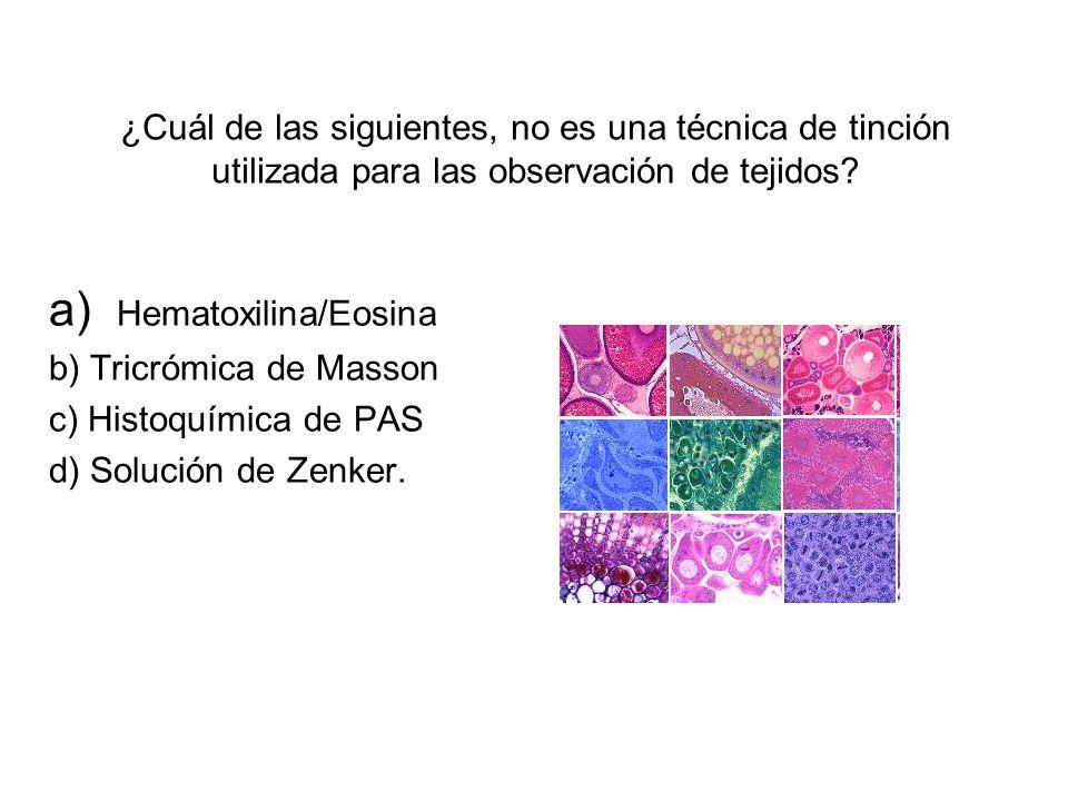 a) Hematoxilina/Eosina