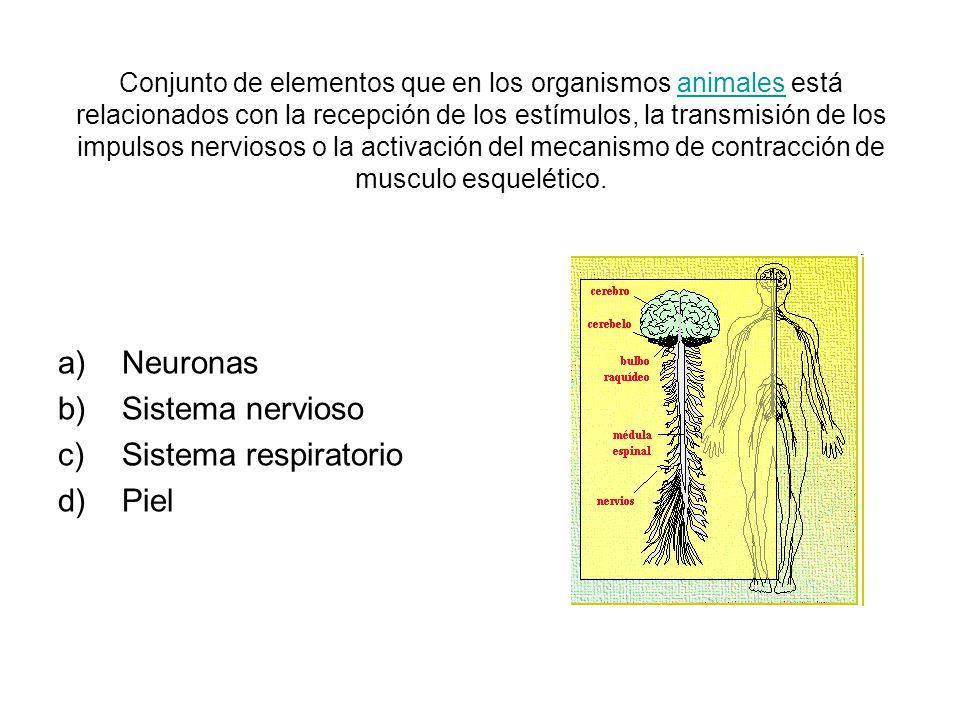 Neuronas Sistema nervioso Sistema respiratorio Piel