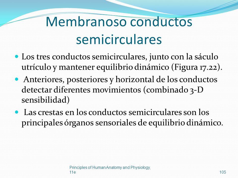 Membranoso conductos semicirculares