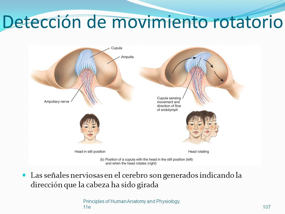Detección de movimiento rotatorio