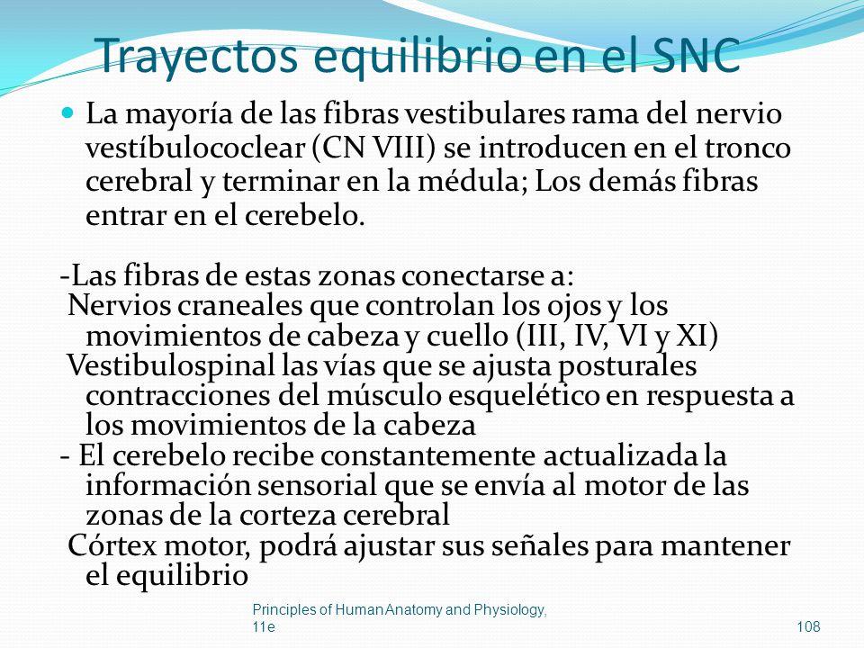 Trayectos equilibrio en el SNC