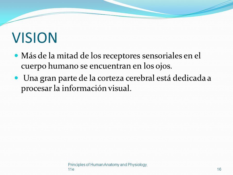 VISION Más de la mitad de los receptores sensoriales en el cuerpo humano se encuentran en los ojos.