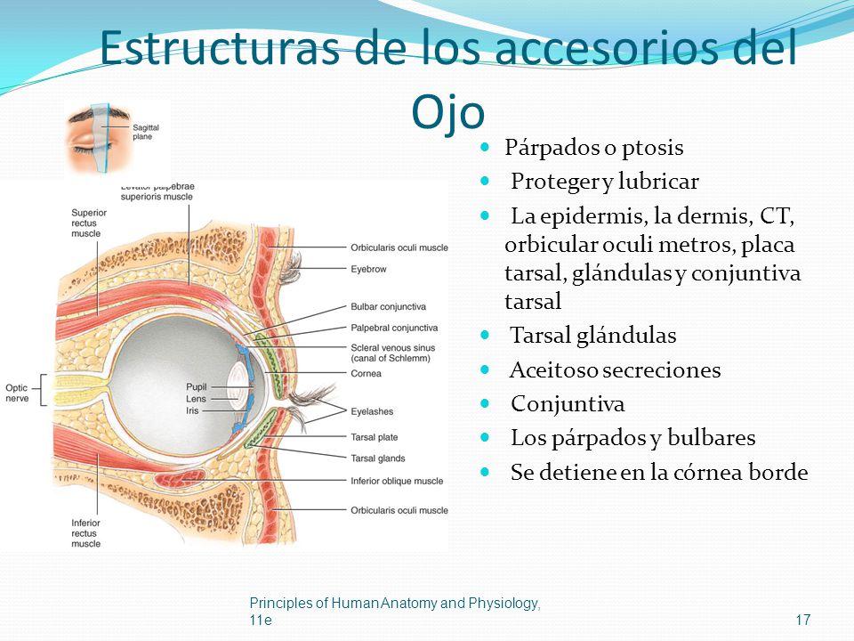 Estructuras de los accesorios del Ojo