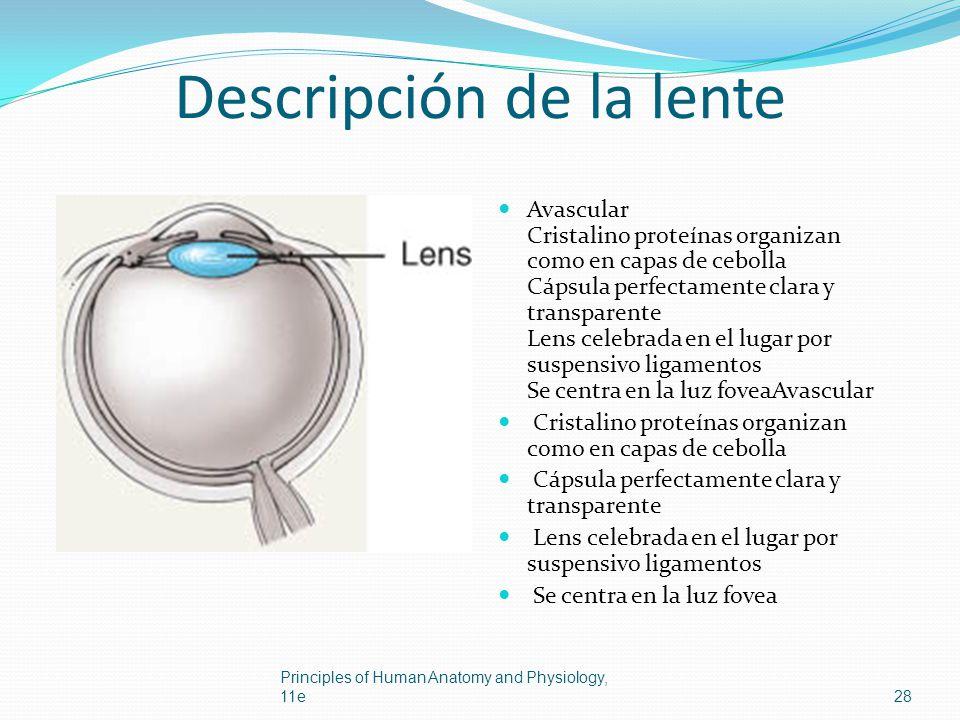 Descripción de la lente
