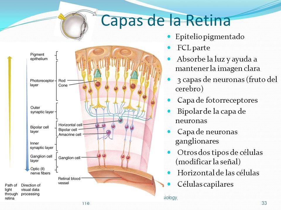 Capas de la Retina Epitelio pigmentado FCL parte