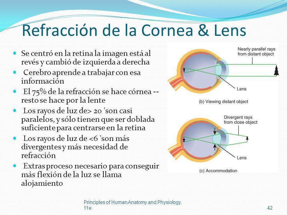 Refracción de la Cornea & Lens