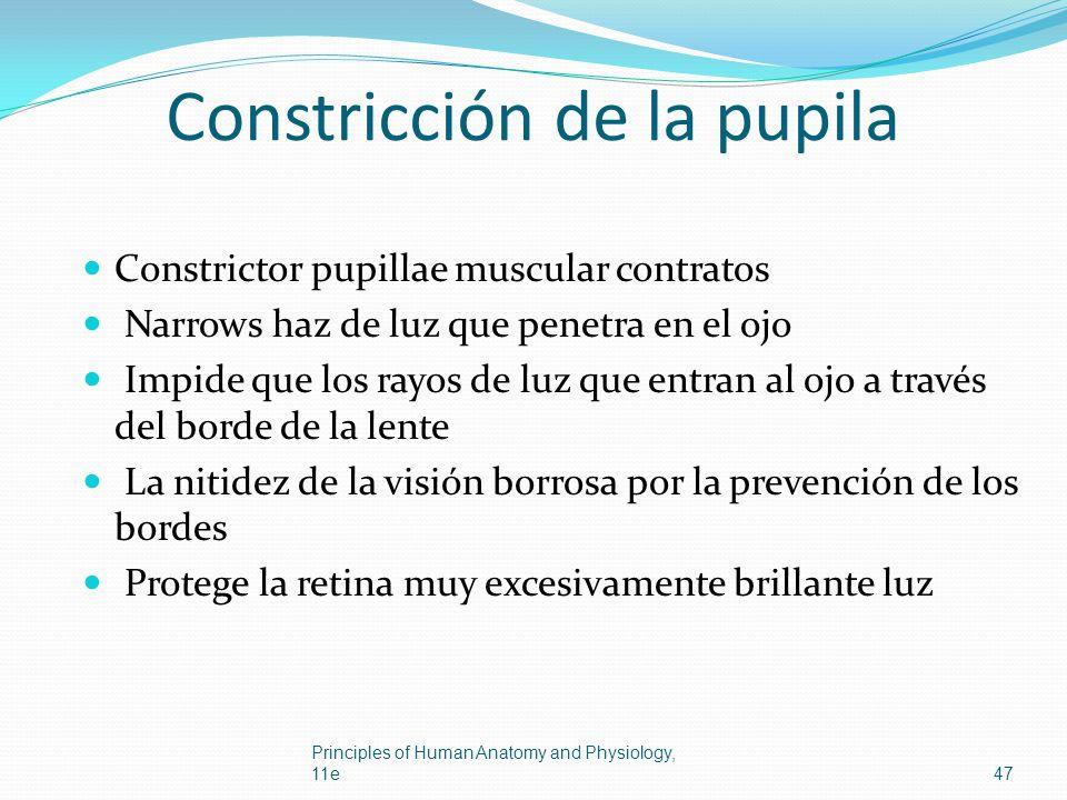 Constricción de la pupila