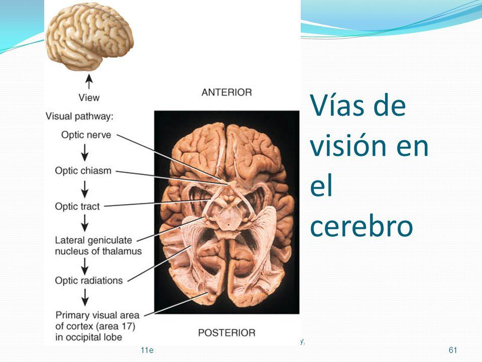 Vías de visión en el cerebro