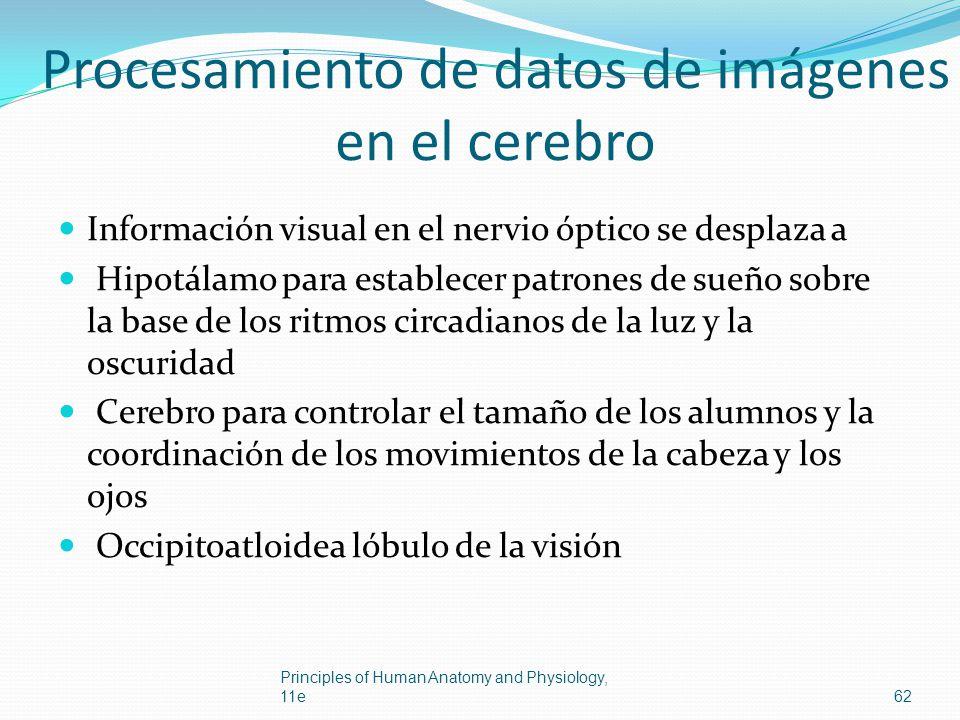 Procesamiento de datos de imágenes en el cerebro