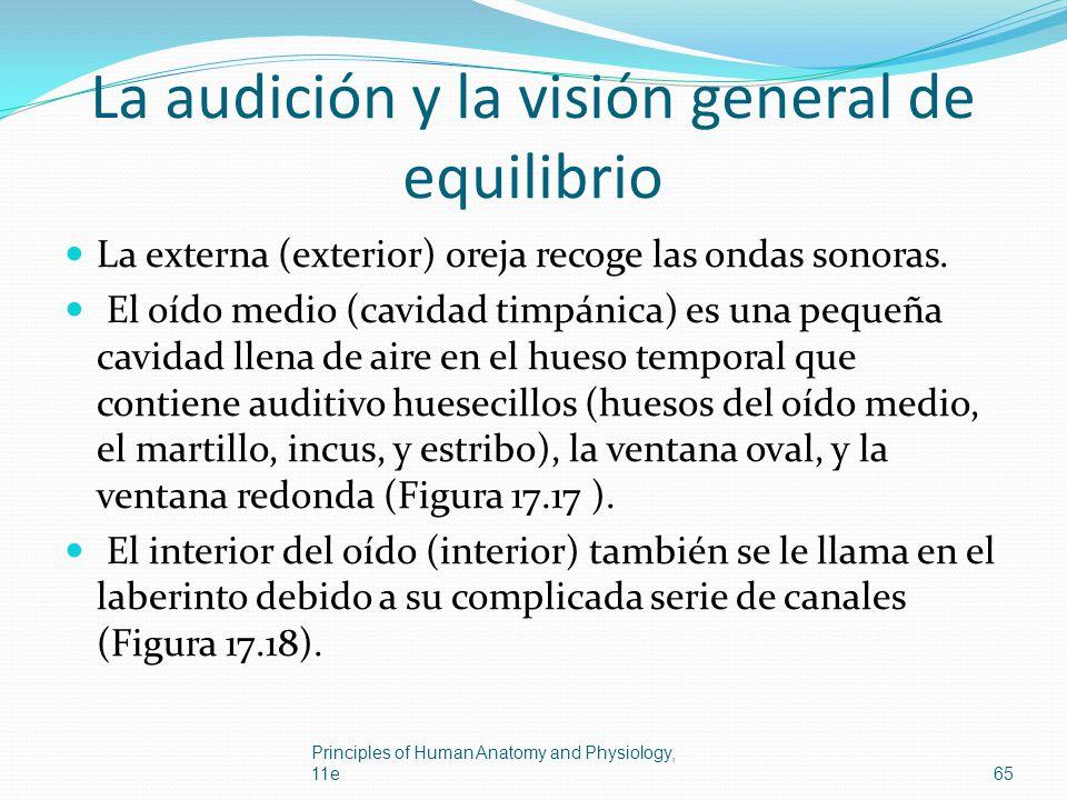La audición y la visión general de equilibrio